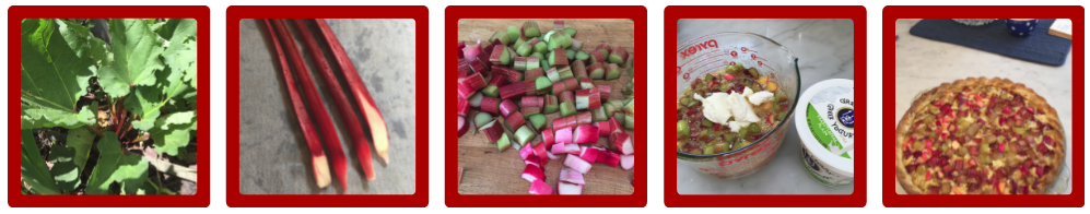 Rhubarb Pictures
