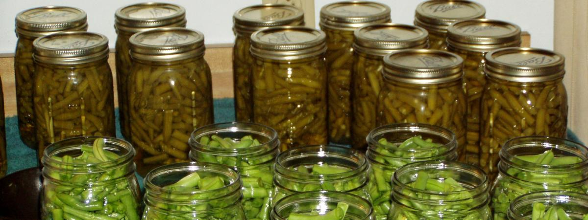 rows of canning jars filled with green beans