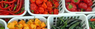 how to freeze peppers for future meals
