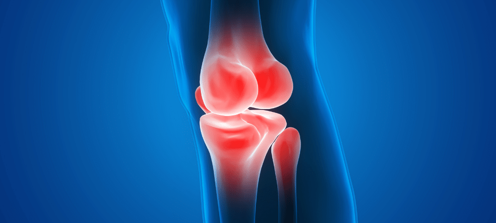 knee bones and joint