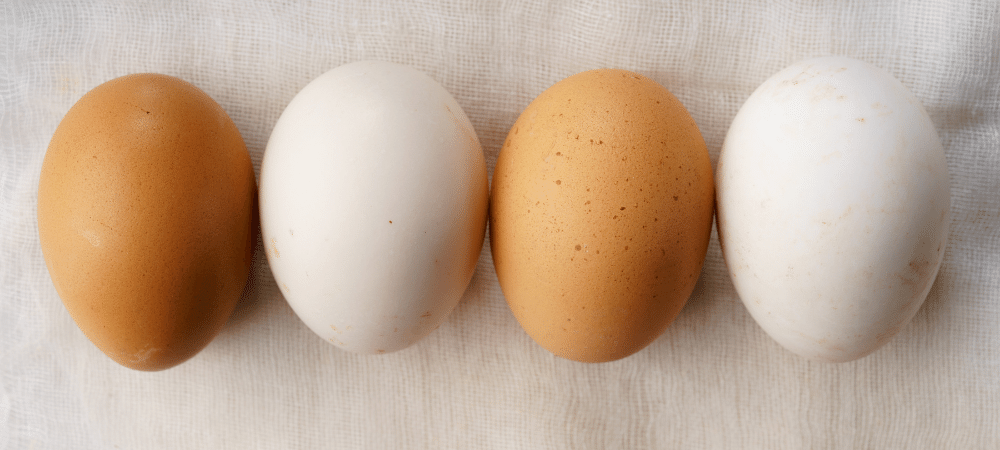 white and brown eggs on a table