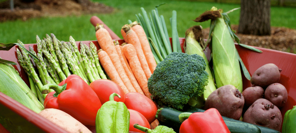 summer vegetable gardening with asparagus, carrots, broccoli, corn, tomatoes, and peppers