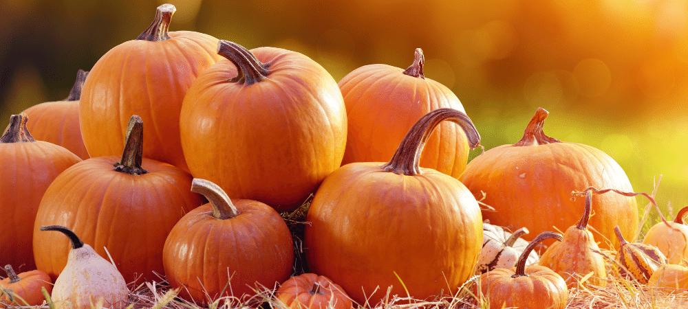 several pumpkins in a field