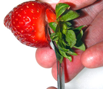 removing cap from strawberry using a small measuring spoon
