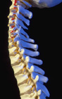 spine to illustrate accompanying information on National Osteoporosis Month