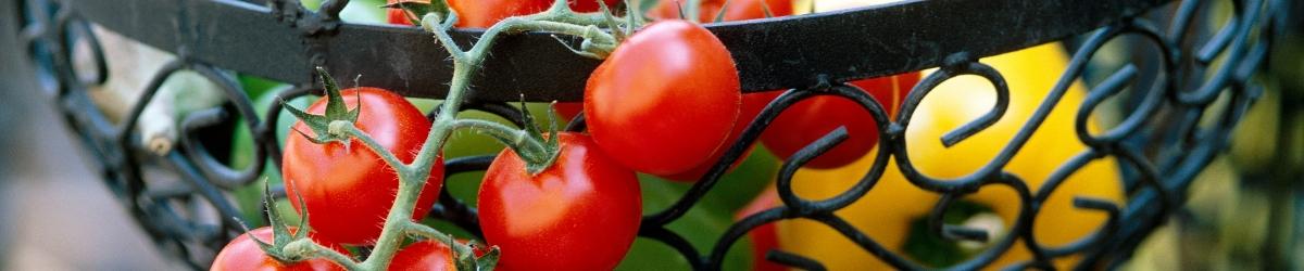 Summertime Vegetables