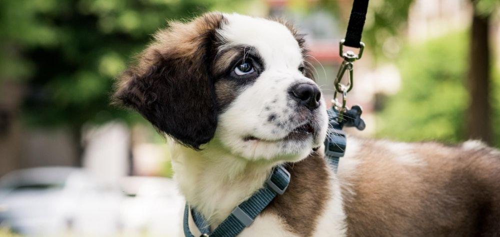 Dog ready for a walk