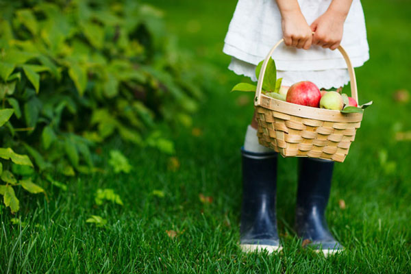girl wearing rainboots holding a basket of apples outside