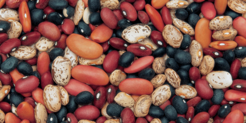 assorted dry beans for cooking from scratch