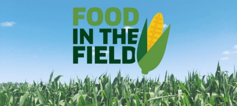food in the field logo in the sky with a corn field below