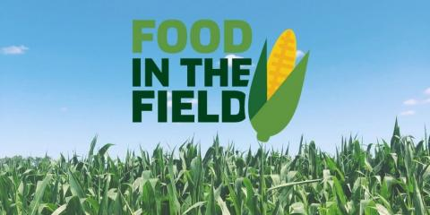 corn field with the Food in the Field logo