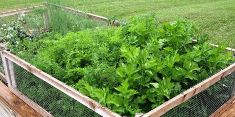 fresh herb garden