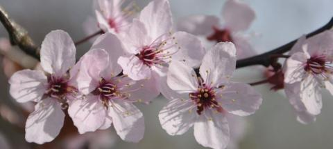 spring blooms on a tree